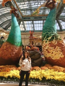 Bellagio Gardens Peacocks | Cathedrals and Cafes Blog