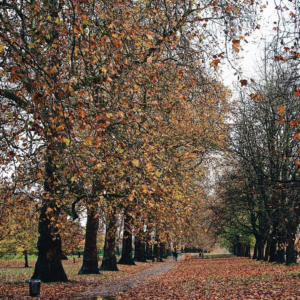 Fall leaves London